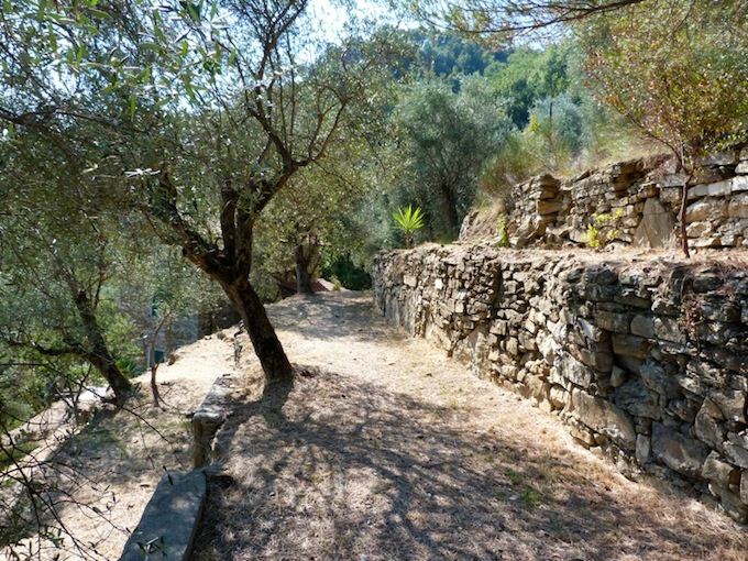Mature olive trees surround the country house property overlooking Dolceacqua