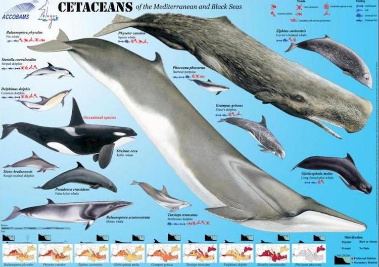 Marine life in the Mediterranean