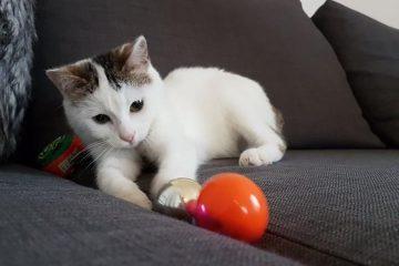 Romy the cat!