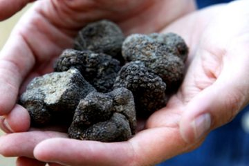 Les truffes noires - truffles